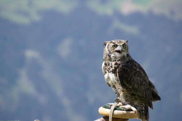 Block image owl 829978