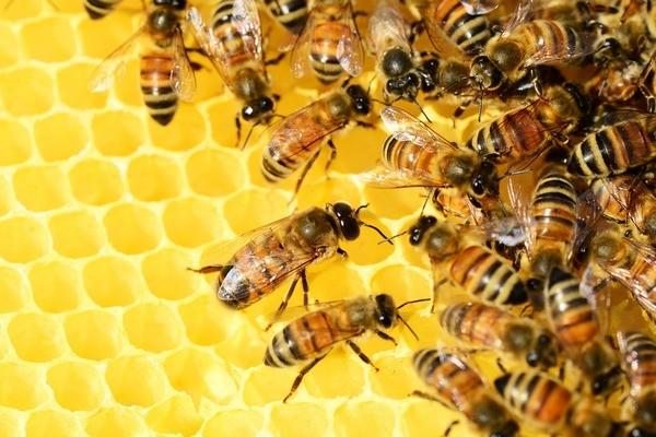 Block image honey bees 326337 1920